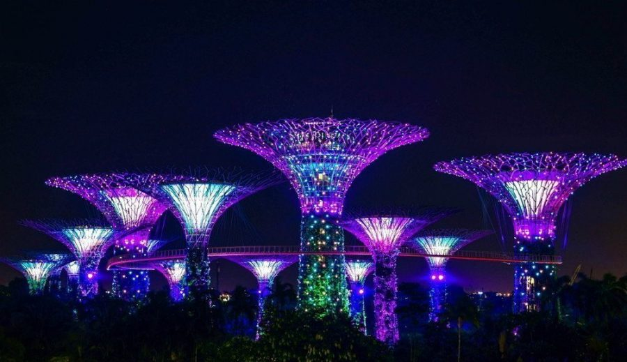 The Supertree Grove trees glowing in the dark in Singapore.