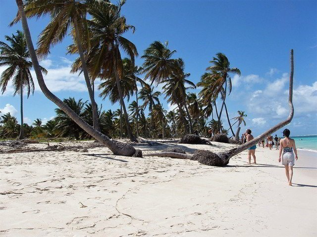 People walking on a beach with palm-trees.