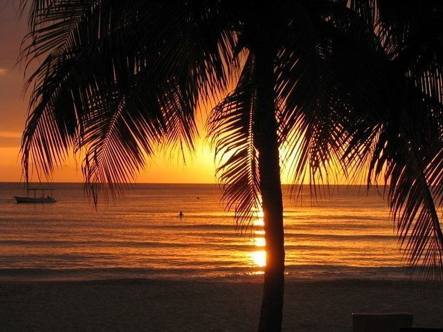 Palm tree silhouette with body of water in the background during a sunset.
