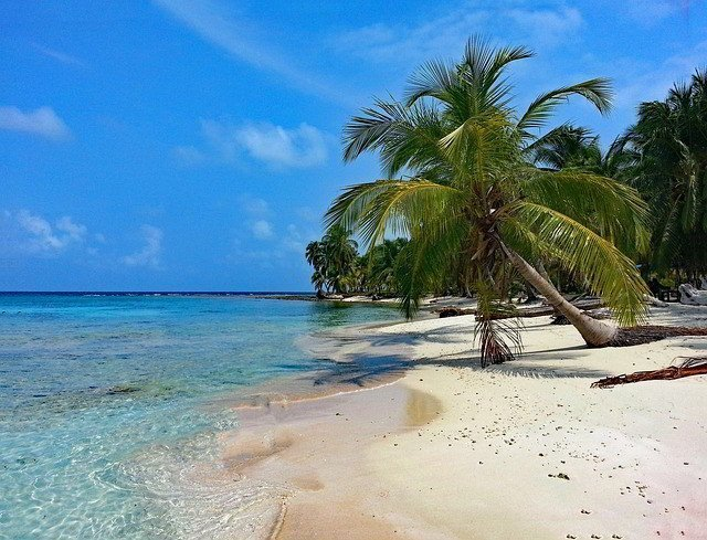 Palm tree on a beach by water.