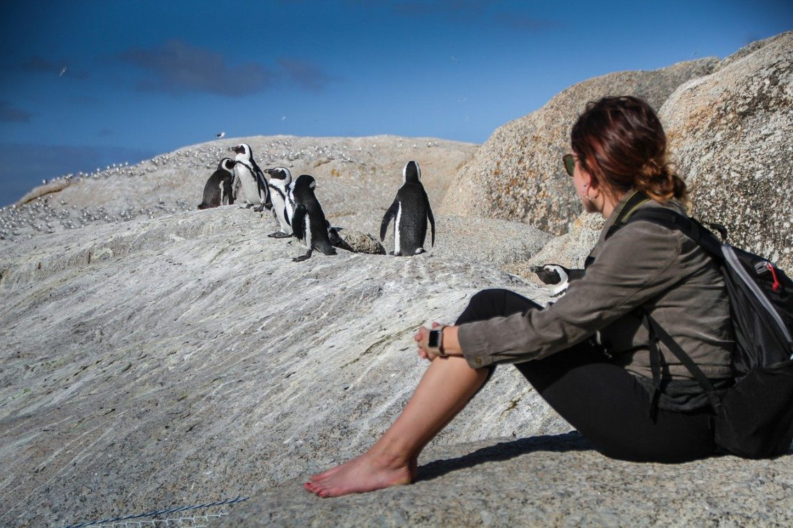 Digital nomad in Africa with penguins