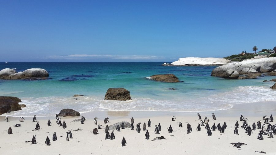 Sandy Beach in Cape Town