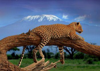 How To Have A Successful Safari Trip