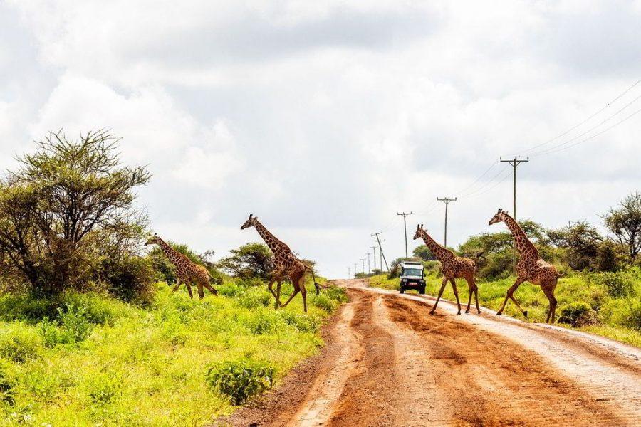 Wildlife on a safari trip.